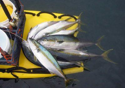 LifeSled Fishing